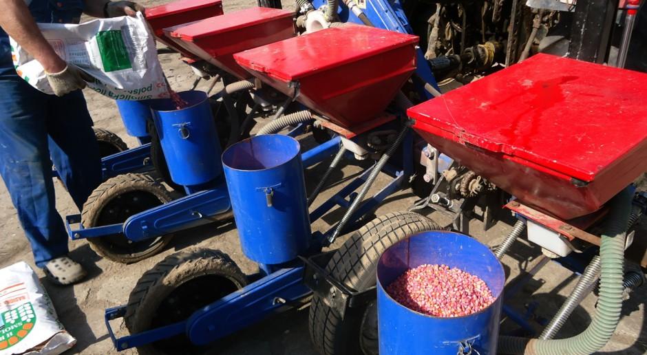 To warunki na polu powinny decydować o terminie siewu kukurydzy