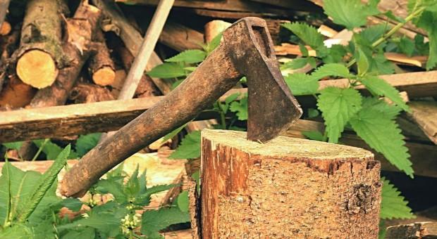 Czy rolnik musi zgłaszać w gminie chęć wycinki drzewa?