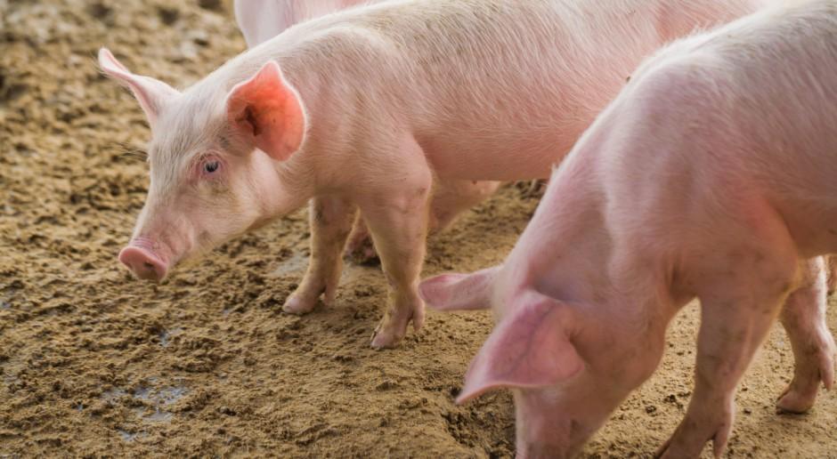 UE: Populacja zwierząt gospodarskich w liczbach w 2019 r.