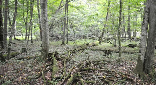 W Puszczy Białowieskiej naukowcy odkryli kurhany i zarysy dawnych pól