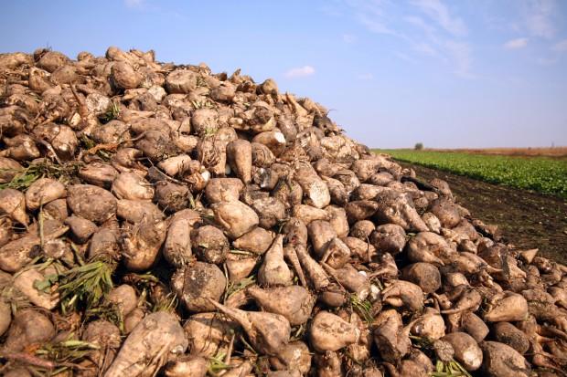 Producenci cukru i plantatorzy buraków podpisali porozumienie o współpracy