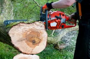 Senat: Komisja proponuje niewielkie zmiany w noweli ws. wycinki drzew