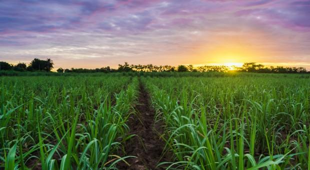 Eksport cukru z Brazylii na rekordowym poziomie