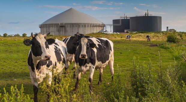 Dlaczego nie możemy wykorzystać w pełni biogazowego potencjału Polski?