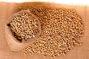 Podlaska Izba Rolnicza przeciw GMO w Polsce