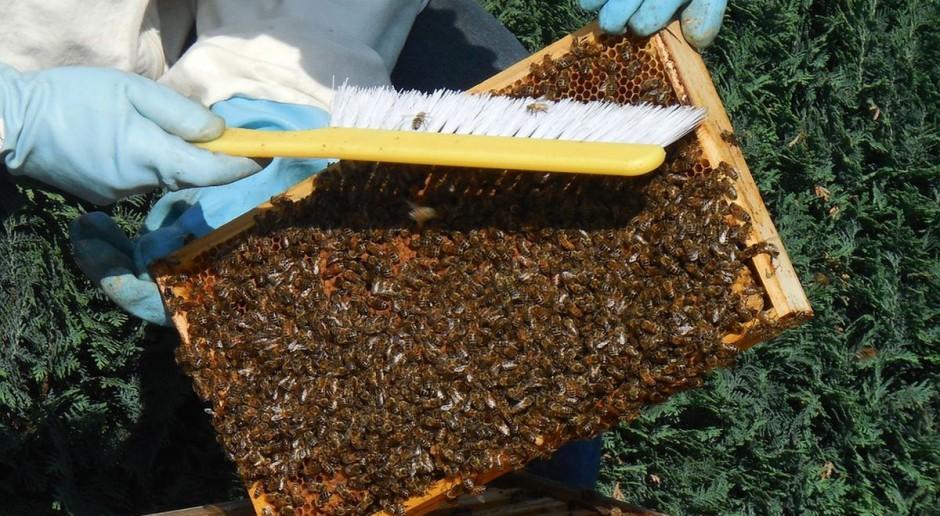 Czy drobni pszczelarze dostaną dopłaty?