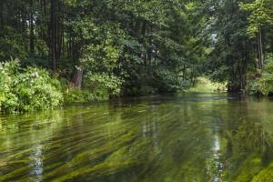 40 mln euro z programu LIFE na ochronę przyrody