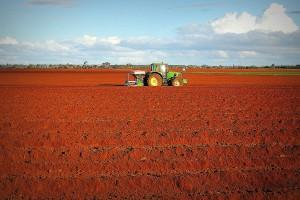 ANR akceptuje niemal wszystkie wnioski o zgodę na kupno ziemi rolnej