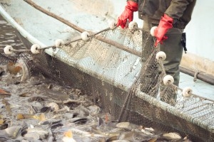 MGMIŻŚ: Resort chce przesunąć dopłaty wodno-środowiskowe na wsparcie rybaków morskich