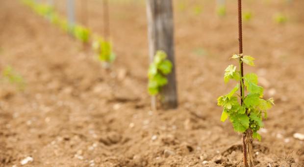 Lubuskie: Rusza kolejna edycja weekendów otwartych winnic