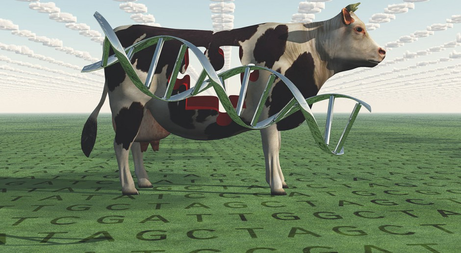 Moda na mleko bez GMO