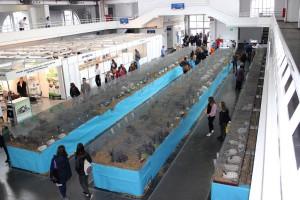 Trwa 28. Krajowa Wystawa Zwierząt Hodowlanych – dziś ostatni dzień