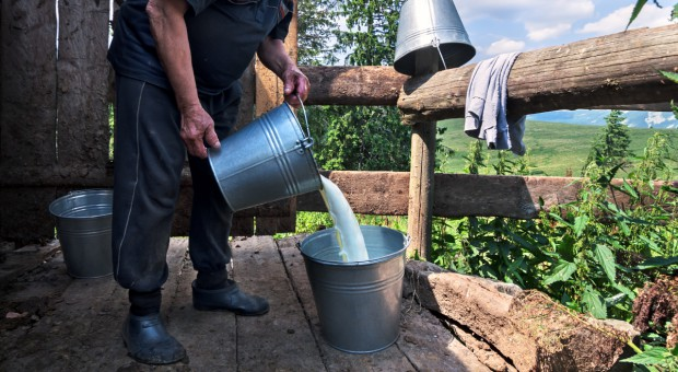 Świeże mleko jako nowy trend wśród smakoszy
