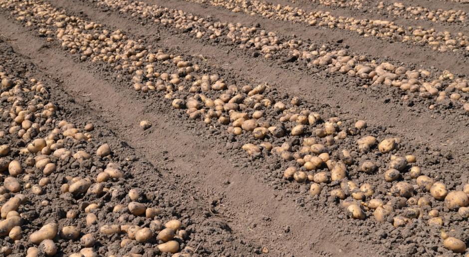 MRiRW: Zmieniają się zasady wywozu ziemniaków