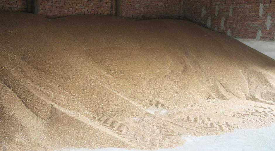 Zwalczanie szkodników magazynowych w ziarnie zbóż