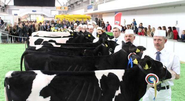 Czy warto brać udział w wystawach hodowlanych?