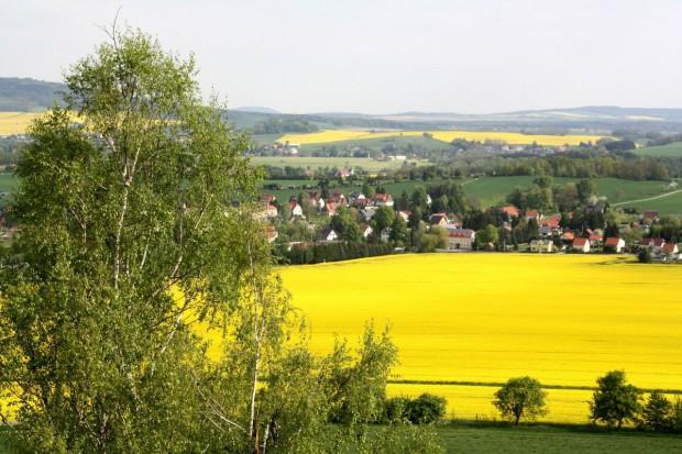 Rząd zatwierdził polskie priorytety dot. wspólnej polityki rolnej po 2020 r.