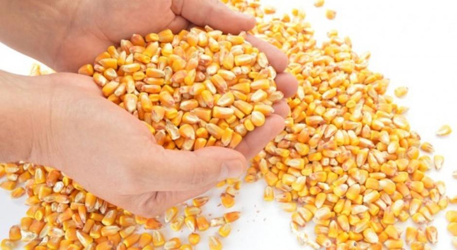 Ukraina: Mniejszy eksport zbóż w sezonie 2017/2018