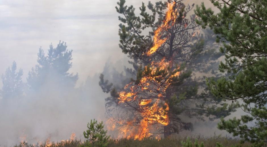 """W polskich lasach utrzymuje się """"pożarowa pogoda"""""""