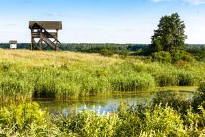 Biebrzański Park Narodowy chce wydzierżawić rolnikom blisko 600 ha łąk