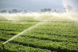 Wybieramy system do nawadniania upraw rolnych