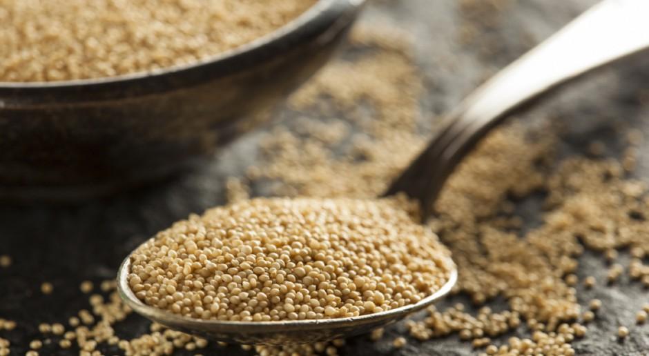 Stare odmiany zbóż wracają do łask