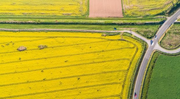 Węgry: Prasa o ubiegłorocznych rekordach w rolnictwie
