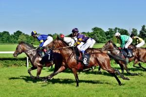 Chińczycy chcą kupować polskie konie sportowe