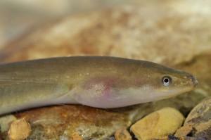 Olsztyn: Ruszył proces ws. nieprawidłowości przy projekcie rozrodu ryb