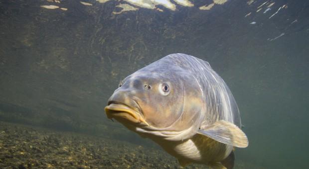 Hodowcy ryb: Utrata rekompensat grozi zamknięciem hodowli