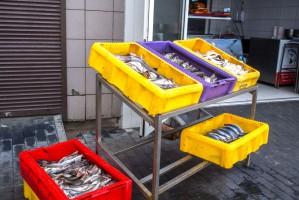 Raport ETO: W UE nadal brak skutecznego systemu kontroli rybołówstwa