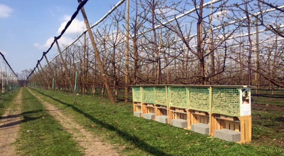 60 tys. kokonów murarki ogrodowej przekazanych przez Sumi Agro