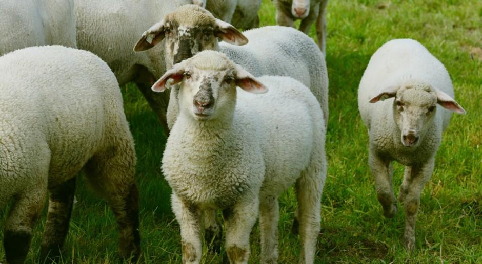 """Nowa przewodnicząca grupy roboczej """"Owce"""""""