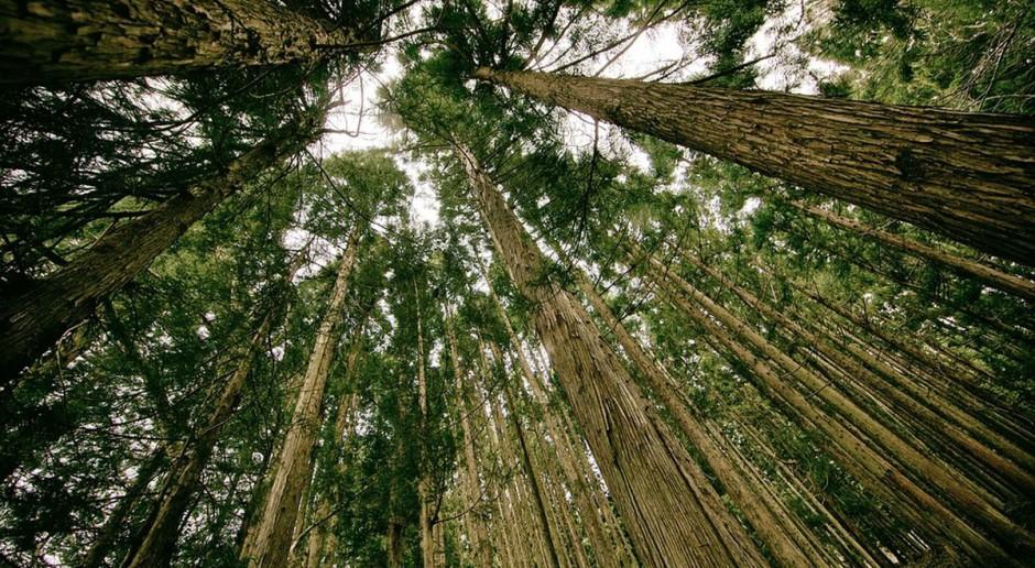 Będzie łatwiej sprzedać las?