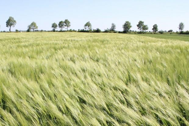 IUNG: W Polsce obecnie nie ma suszy rolniczej