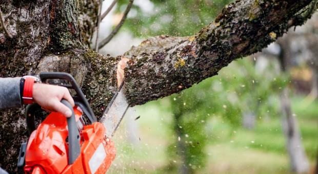 Wypadek w lesie a odszkodowanie z tytułu OC?