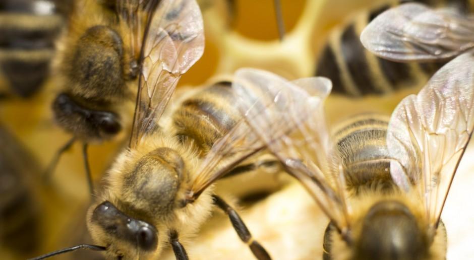 Słowenia chce ustanowienia Światowego Dnia Pszczoły