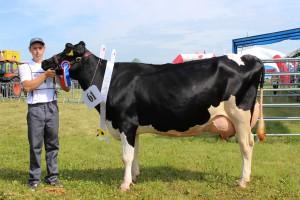 Czempion w kategorii krowy PHF odmiany HO w III i dalszej laktacji: