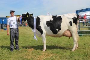 Czempion w kategorii krowy PHF odmiany HO w II laktacji: