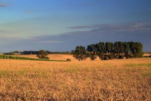 Roczne podsumowanie zmian w zasadach sprzedaży ziemi