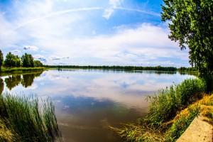 Lasy Państwowe chcą przejąć od samorządu spółkę Stawy Milickie