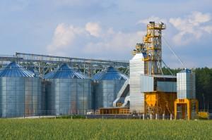 IERiGŻ: Ceny zbóż mogą rosnąć umiarkowanie do przełomu I i II kw. '18