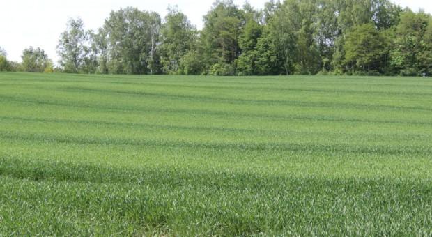 IUNG: Rośnie deficyt wody dla roślin uprawnych, ale bez znacznego wpływu na plony