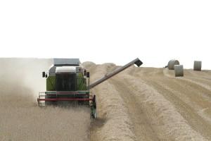 Niemcy: Podwyższona prognoza zbiorów zbóż w 2017 r.