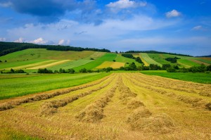 Polska nie miała polityki agrarnej