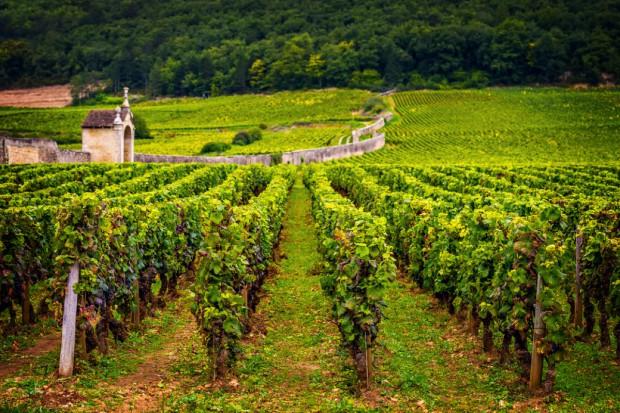 Francja: Targi wina Vinexpo – wielkie wina i wielkie pieniądze