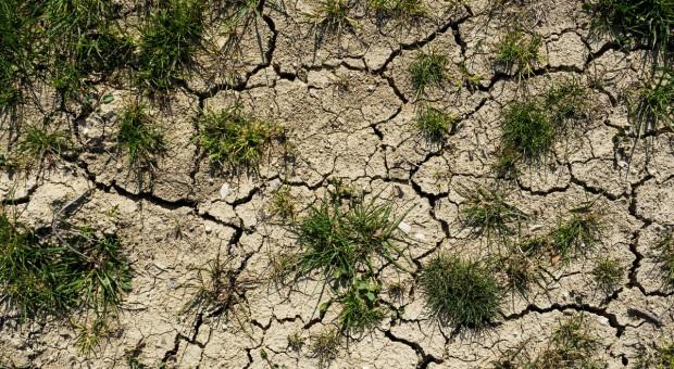 Włochy: Coraz większa susza, stan kryzysowy w Parmie i Piacenzy