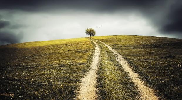 Ile kosztuje dzierżawa ziemi na rynku prywatnym?
