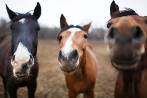 Terlecki: Projekt dot. ochrony zwierząt wymaga dopracowania