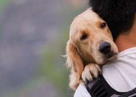 Jaki: Zmiany w ustawie o ochronie zwierząt po naciskach ministerstwa rolnictwa